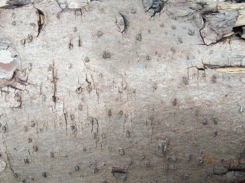 Текстура древесины спада крупного плана стоковые изображения rf