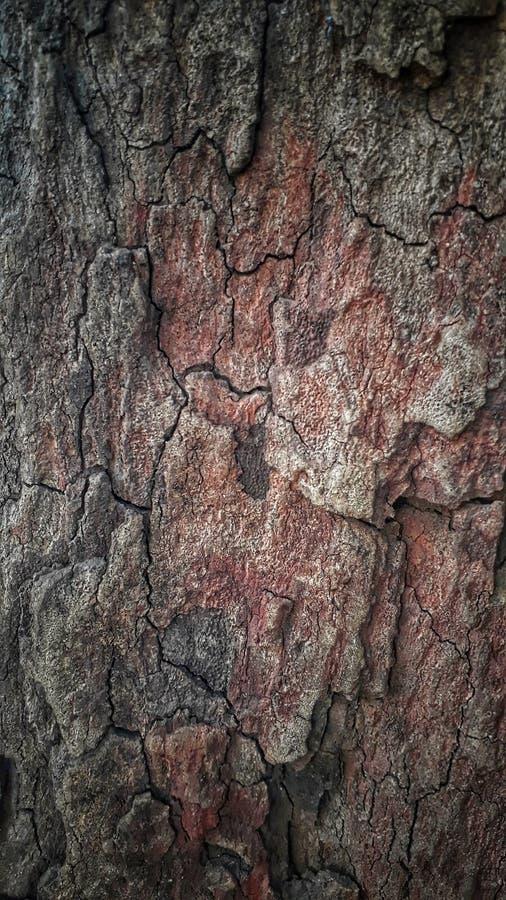 текстура древообразная стоковые фотографии rf