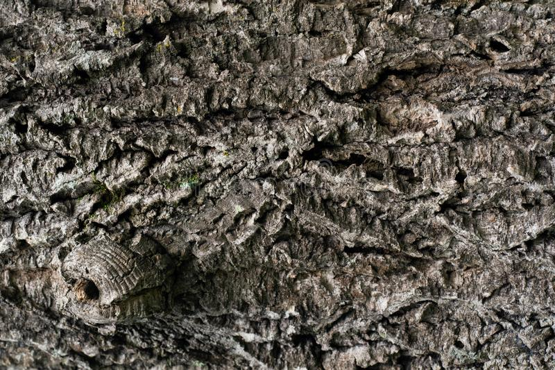 Текстура естественной деревянной коры в конце вверх стоковые изображения rf