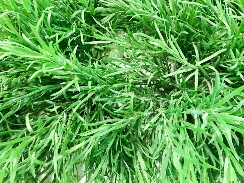 Текстура естественных зеленых продолговатых красивых листьев небольшое свежего зелень gentile предпосылки абстракции стоковые изображения rf