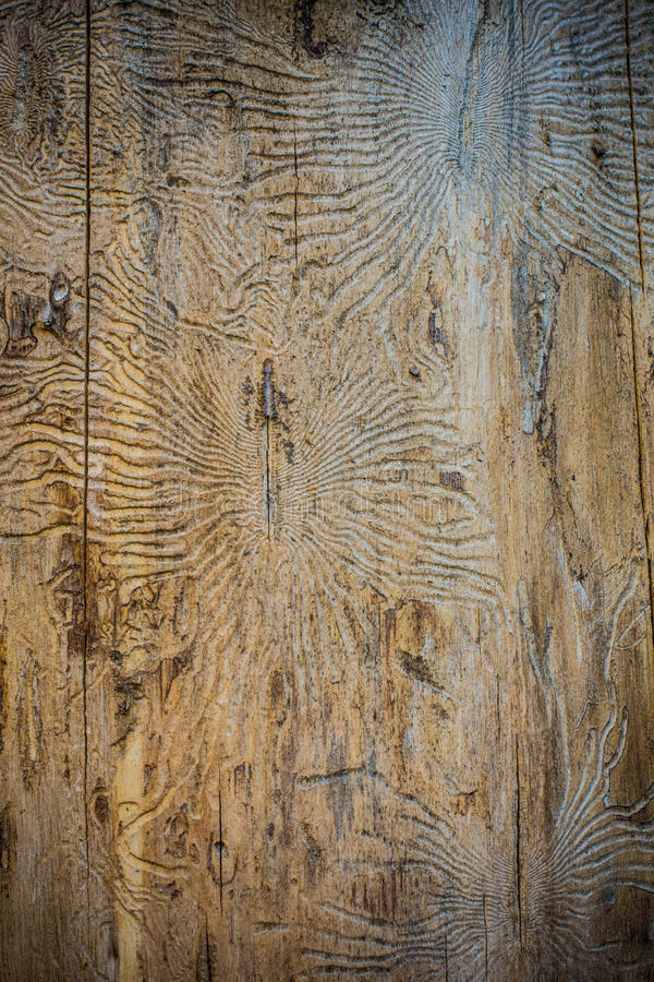 Текстура жука расшивы стоковое фото rf