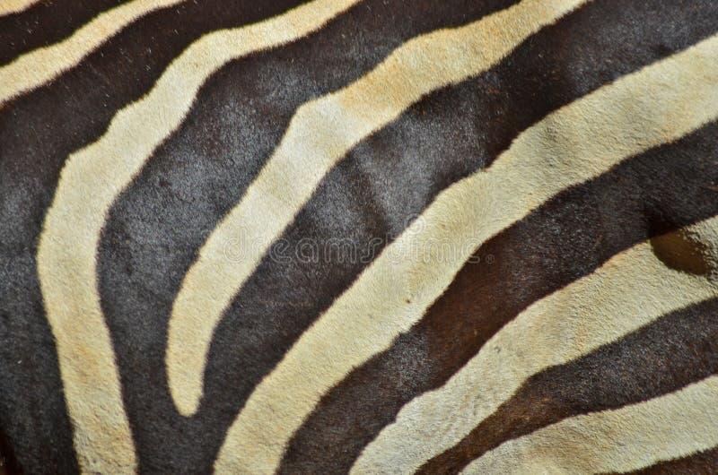 Текстура зебры кожаная стоковая фотография