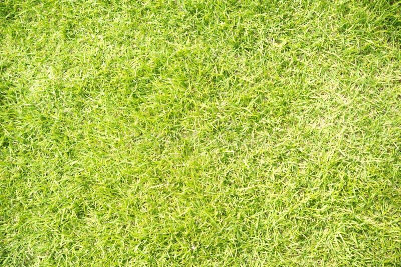 текстура зеленого цвета травы стоковое фото