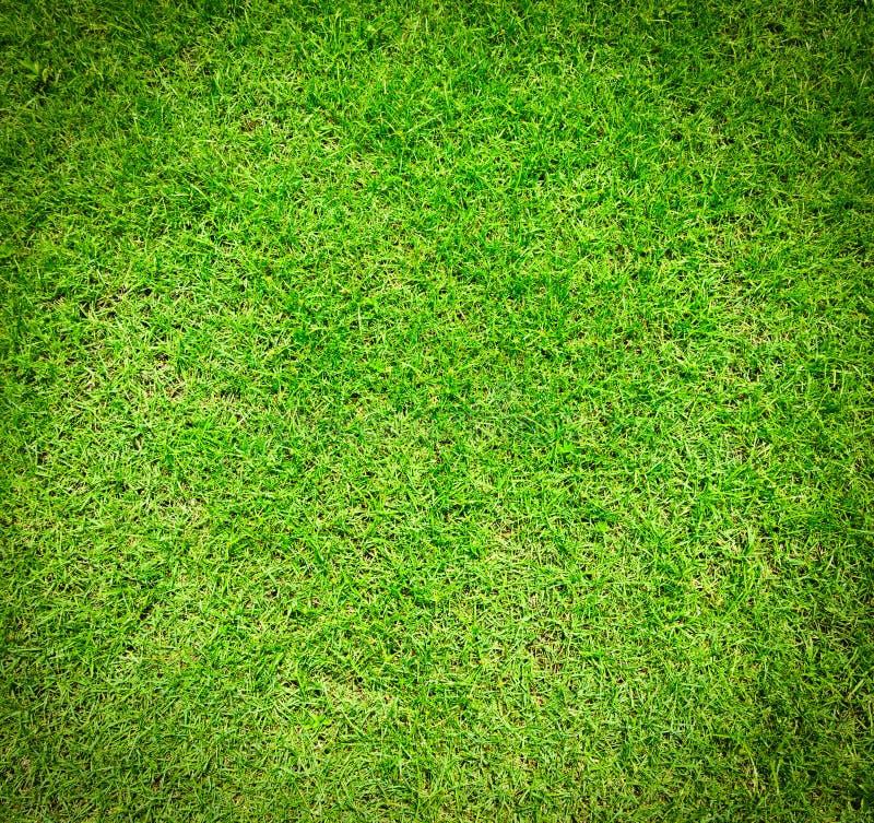 текстура зеленого цвета травы стоковые изображения