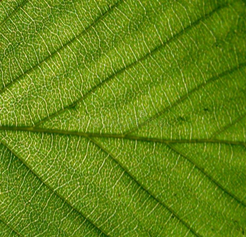 Текстура зеленых лист стоковое изображение rf