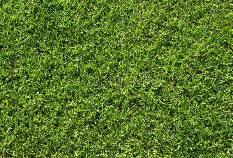 Цвет зелёной лужайки