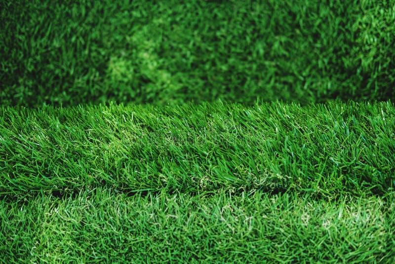 Текстура зеленой травы, лестницы дерновины, малая глубина селективного фокуса поля стоковое фото