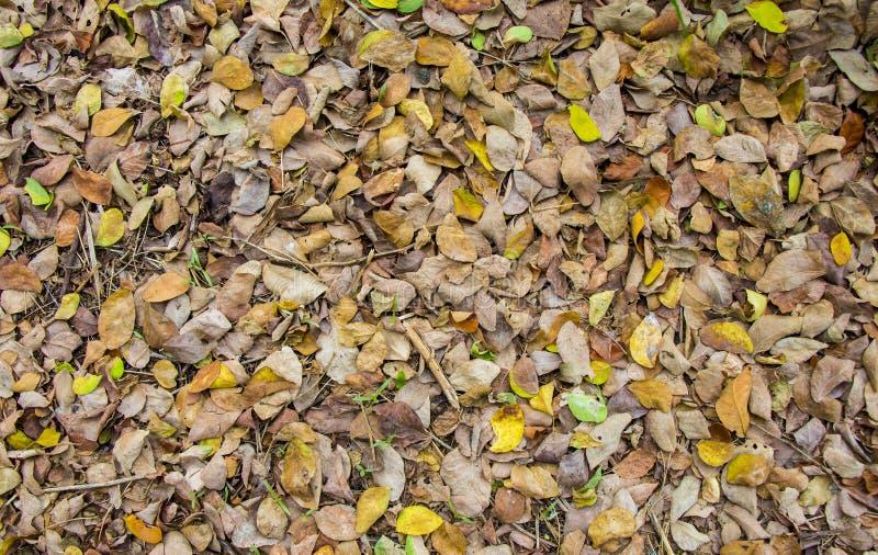 Текстура листьев осени смолотая стоковая фотография rf