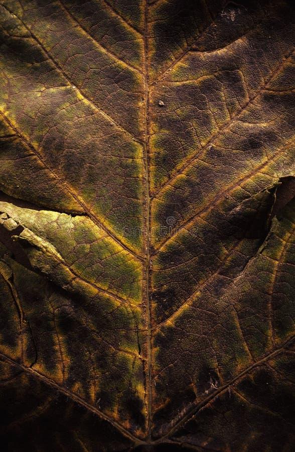 Текстура листьев осени стоковая фотография rf