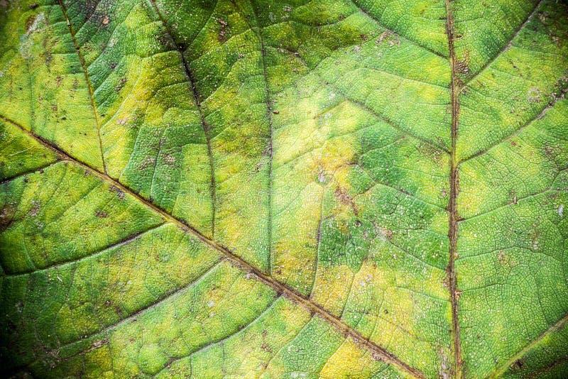 Текстура лист осени стоковое изображение rf