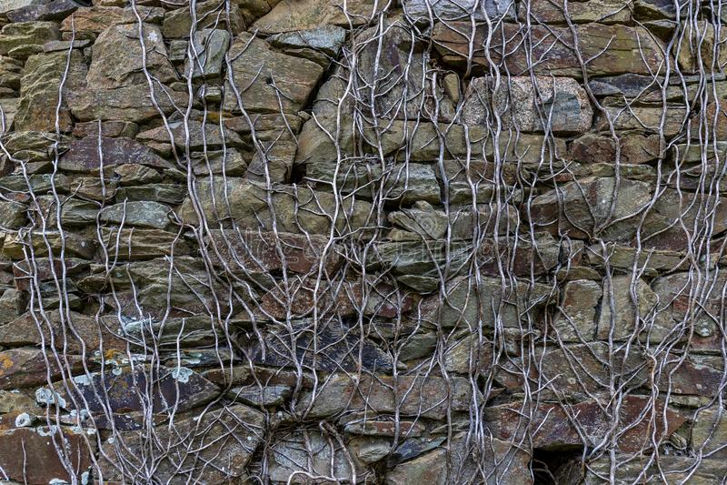 Текстура камня и корней стоковое изображение rf