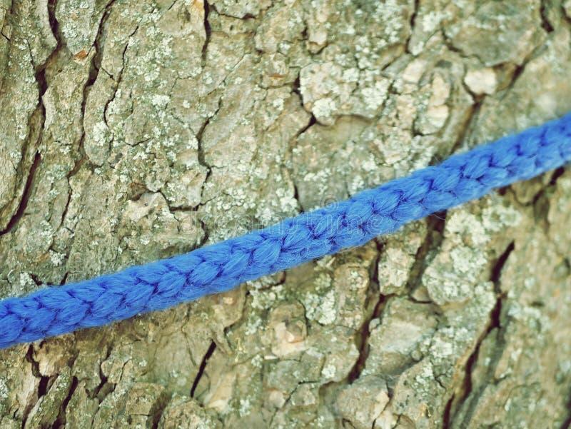Текстура коры дерева и голубая заплетенная веревочка, среда обитания, концепция взбираться стоковая фотография