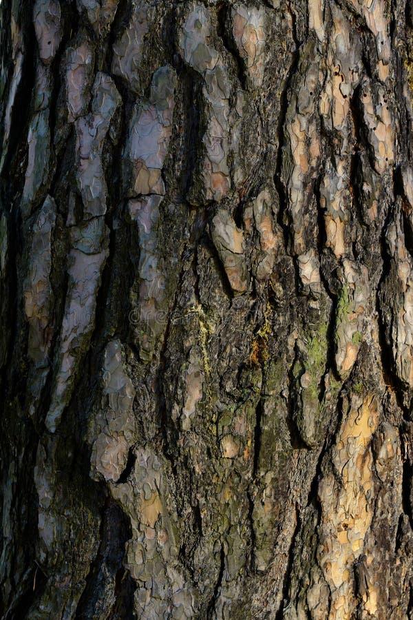 Текстура коры дерева стоковое фото