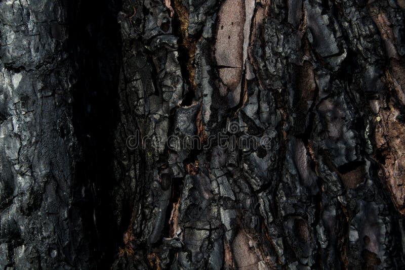 Текстура коры, который сгорели дерева Уголь и углерод стоковая фотография