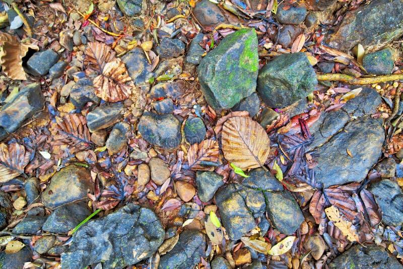 Текстура красочных листьев и камней в сухой кровати заводи стоковая фотография rf