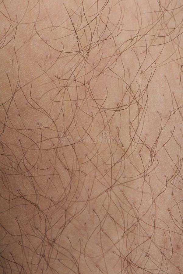 Текстура крупного плана волосатой кожи стоковая фотография rf