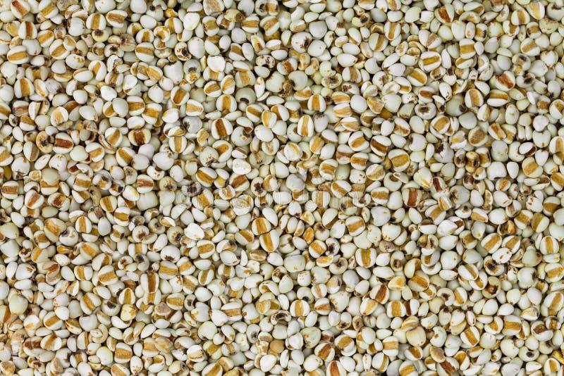 Текстура крупного плана высушенного китайского ячменя жемчуга, ` s работы срывает зерно стоковая фотография rf