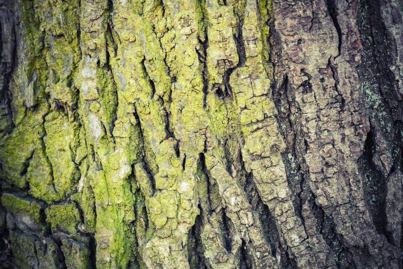 Текстура крупного плана старой зеленой коры дерева, детального фото стоковое изображение