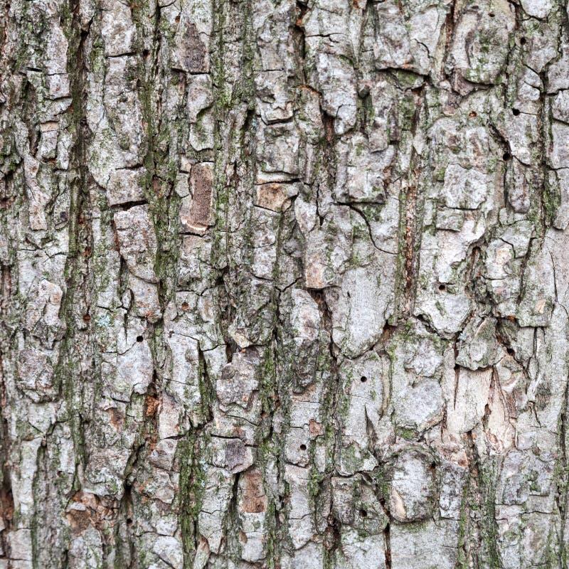Текстура крупного плана старой коры дерева стоковые изображения rf