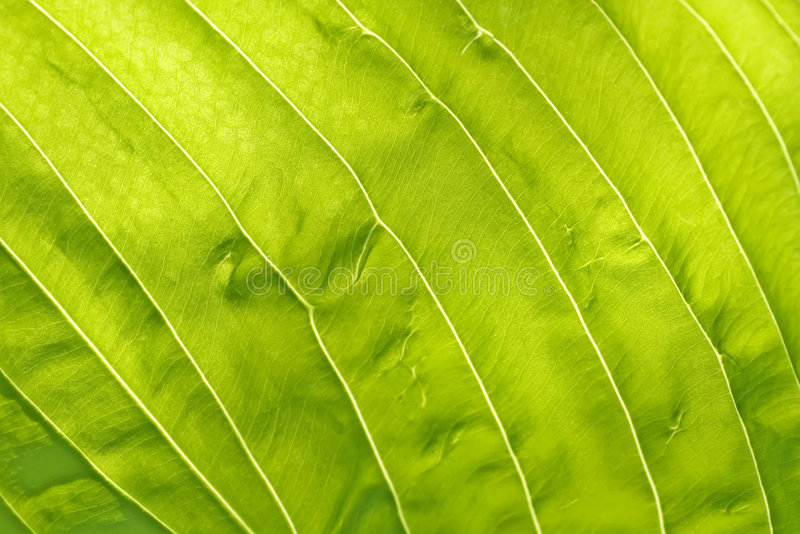 текстура листьев стоковое фото rf