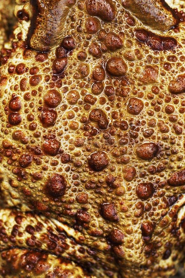 кринице лягушачья кожа картинки договор