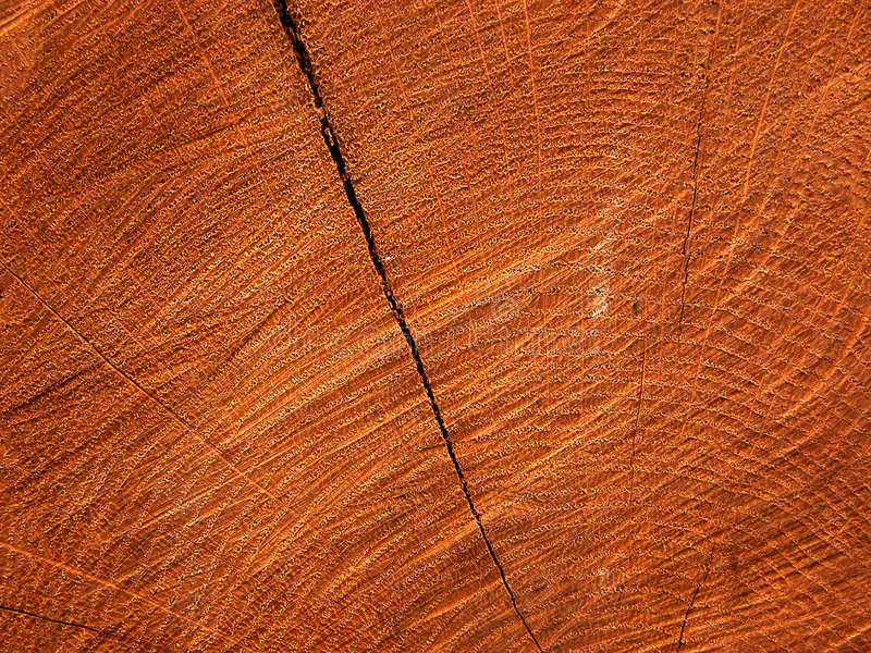 текстура пилы отрезока отказа древообразная стоковые фото