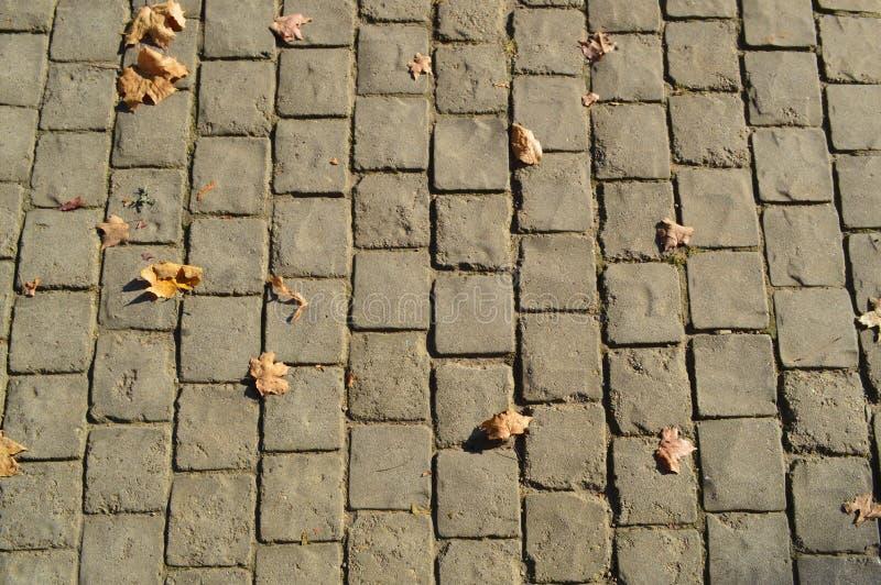 Текстура плит серого прямоугольного конкретного камня вымощая на дороге со швами зелень gentile предпосылки абстракции стоковое фото rf