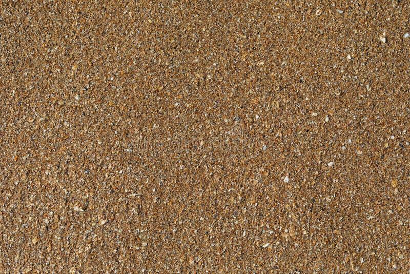 Текстура поверхности песчаного пляжа с задавленными раковинами стоковые фотографии rf