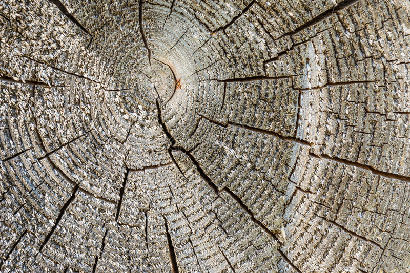 Текстура постарела треснутый деревянный раздел с кольцами, абстрактная предпосылка дерева стоковое изображение