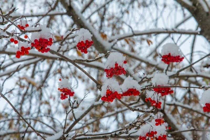 Текстура, предпосылка, картина первый снежок Бело и пушисто yell стоковые фото