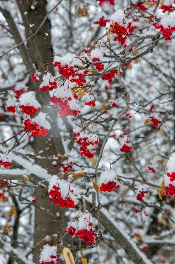 Текстура, предпосылка, картина первый снежок Бело и пушисто yell стоковое фото