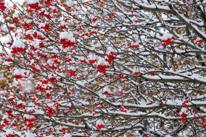 Текстура, предпосылка, картина первый снежок Бело и пушисто yell стоковые фотографии rf