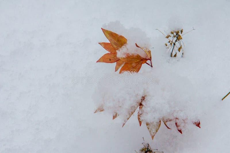 Текстура, предпосылка, картина первый снежок Бело и пушисто yell стоковое изображение