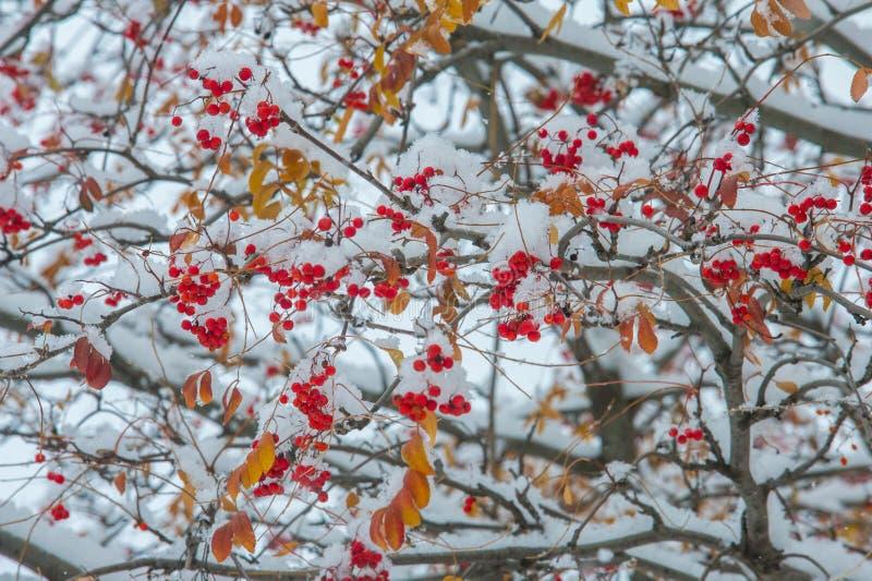 Текстура, предпосылка, картина первый снежок Бело и пушисто yell стоковая фотография rf