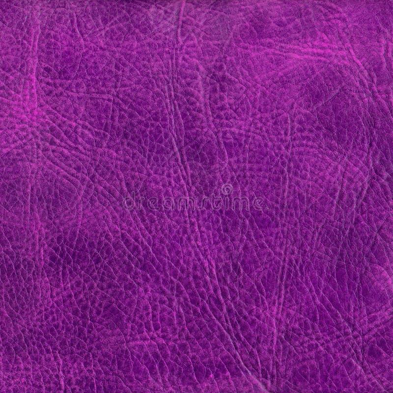 текстура предпосылки кожаная пурпуровая к стоковые изображения rf