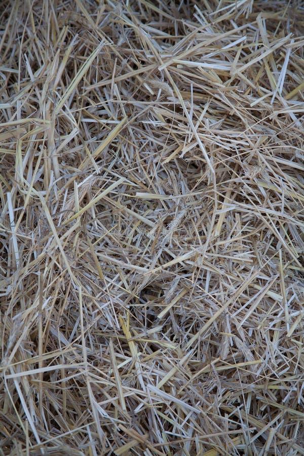 Текстура предпосылки сена безшовная сухая стоковое фото rf