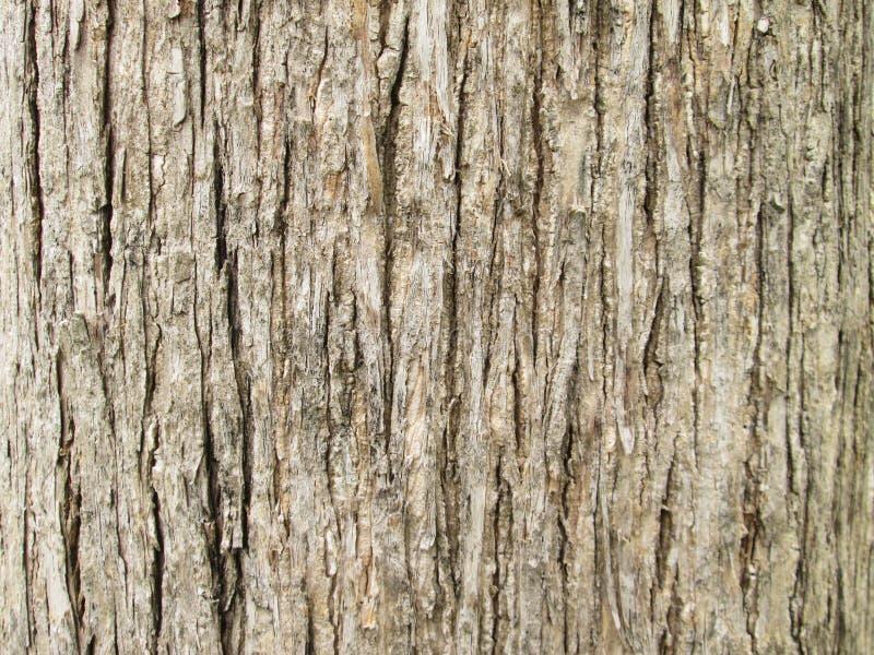 Текстура предпосылки коры дерева teak стоковые фото