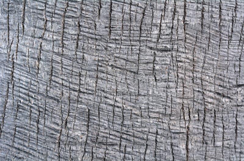 Текстура предпосылки хобота пальмы стоковое изображение rf
