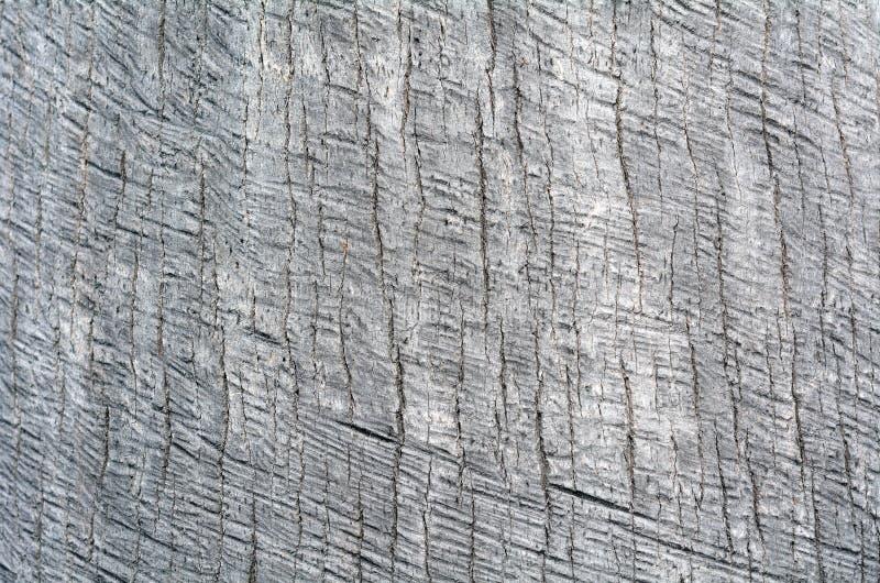 Текстура предпосылки хобота пальмы стоковая фотография