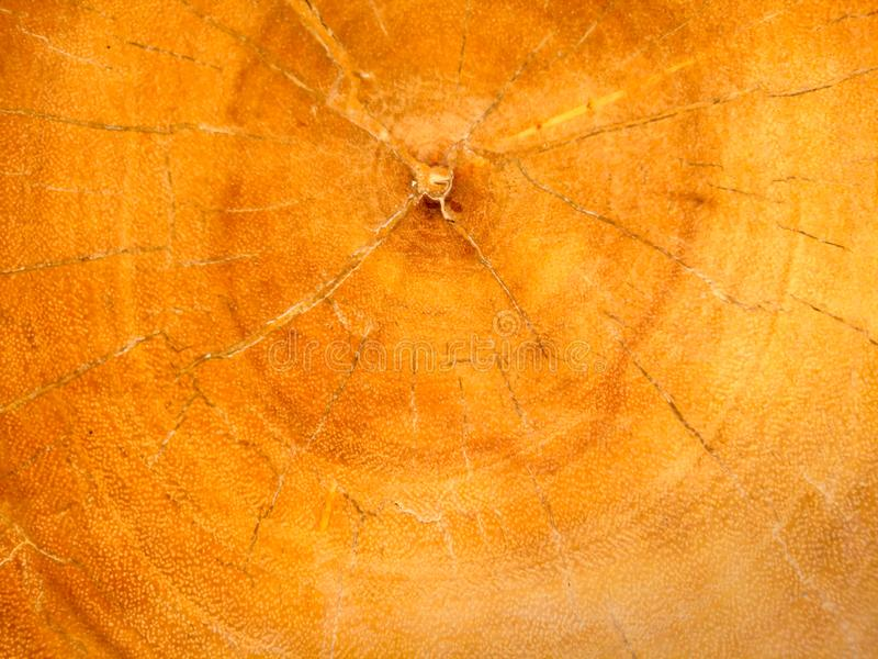 Текстура природы старая деревянная, картина ядра стоковые фото