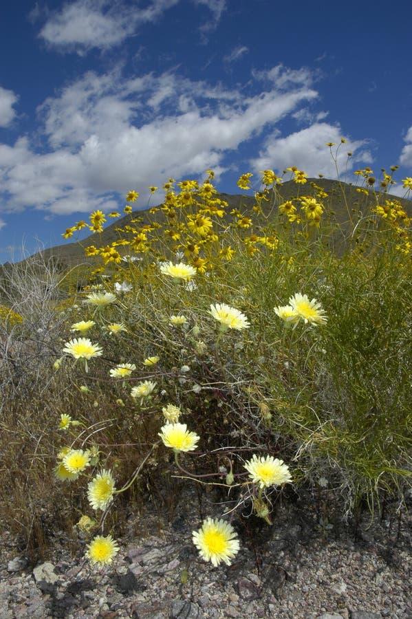 текстура пустыни стоковое изображение