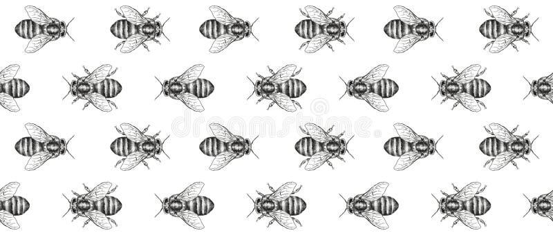 Текстура пчел картина безшовная декоративная тесемка Реалистическая графическая иллюстрация бесплатная иллюстрация