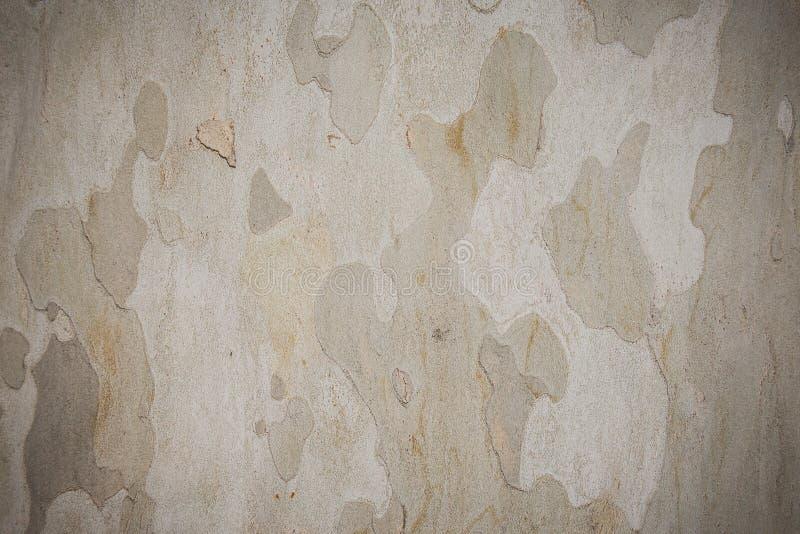 Download Текстура плоского дерева стоковое фото. изображение насчитывающей явор - 40577916