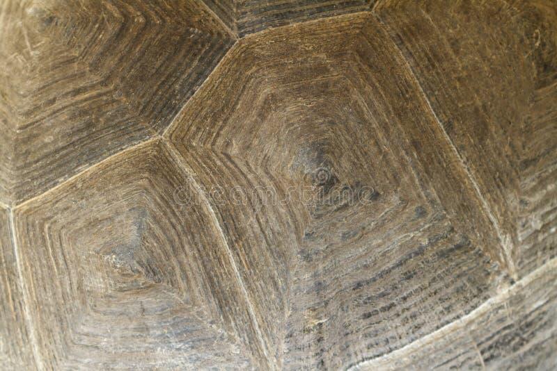 Текстура раковины черепахи, конца вверх по взгляду стоковые фото