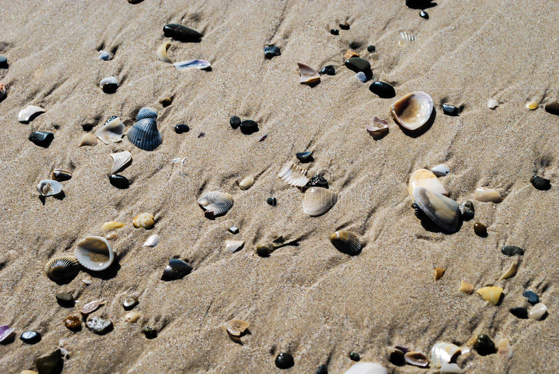 Текстура раковин на песчаном пляже стоковое фото