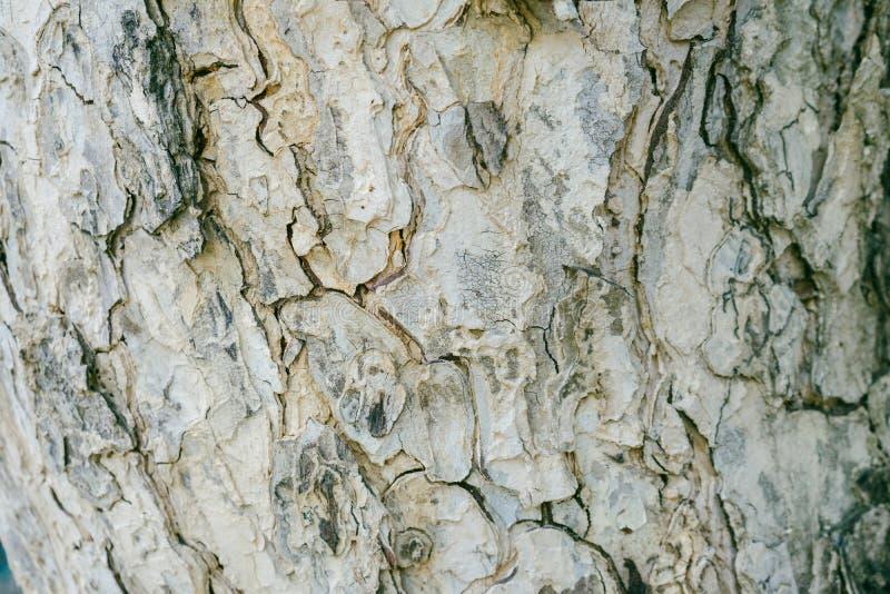Текстура расшивы поверхностная стоковые изображения rf