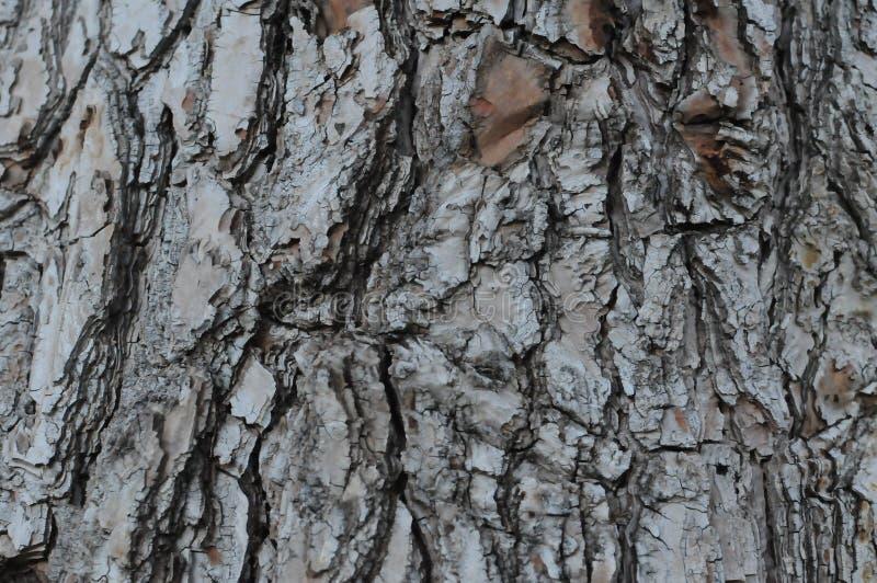 текстура расшивы предпосылки естественная стоковое фото rf