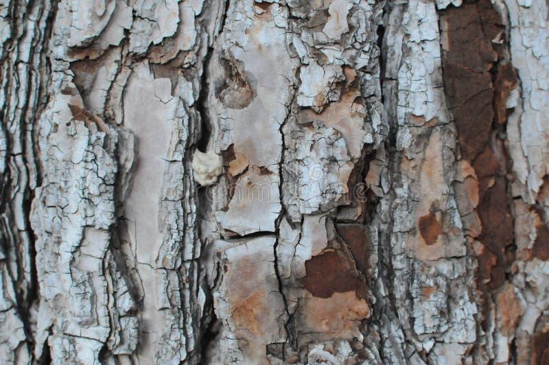 текстура расшивы предпосылки естественная стоковое фото