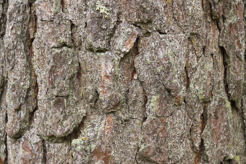 текстура расшивы предпосылки естественная стоковые фотографии rf