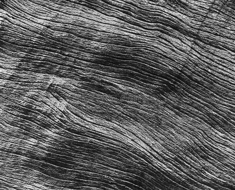 Текстура древесины от дерева, черно-белый тон стоковые изображения rf